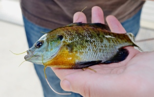 Husband's fishy.